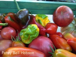Why do you grow tomatoes and vegetables?