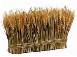 Preserving the Wheat