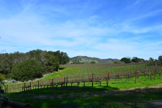 Vineyards at Chappellet