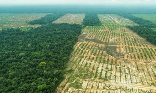 This shows the extent of the deforestation and the havoc it causes to wildlife and natural habitats.
