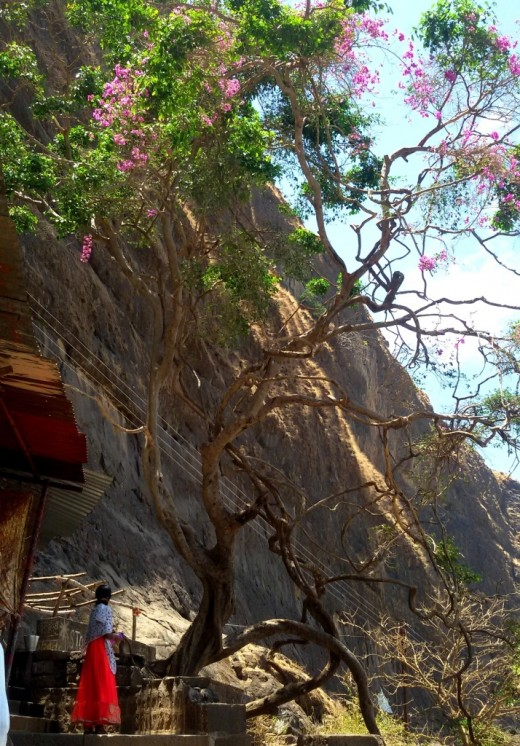 A flowering tree in hard rocky hill in front of the Gangadwar Tirtha
