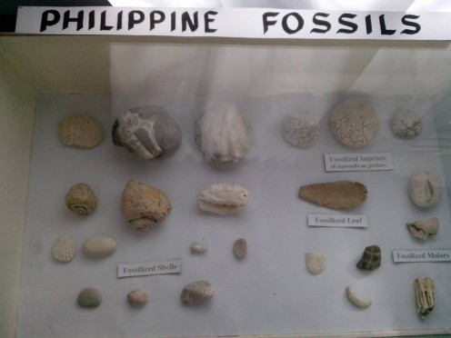 Philippine Fossils in Minalabac (Photo Source: Ireno Alcala)