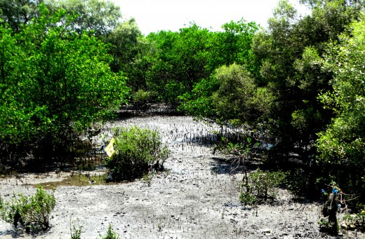 Mangroves in the beach, elephanta