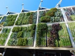 Garden in Concrete jungles - An inside view