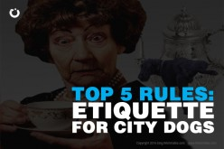 Top 5 Etiquette Rules For New York City Dogs