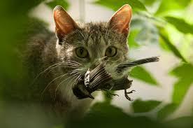 Killer cats roaming the neighborhood