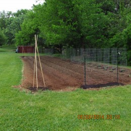 This photo shows where I position my plants, the tomatoes that grow to six feet or more along the back, so as not to block any sunlight from the shorter plants and a bean and pea station in the foreground.