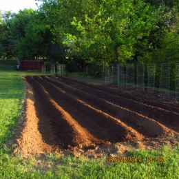 After raking and hoeing my rows, I begin the planting with the taller plants in the back.