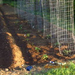 I use wire cages for my tomatoes to grow up on and try to get them in first as they take all summer to bear fruit, with jalapenos peppers in front of them.