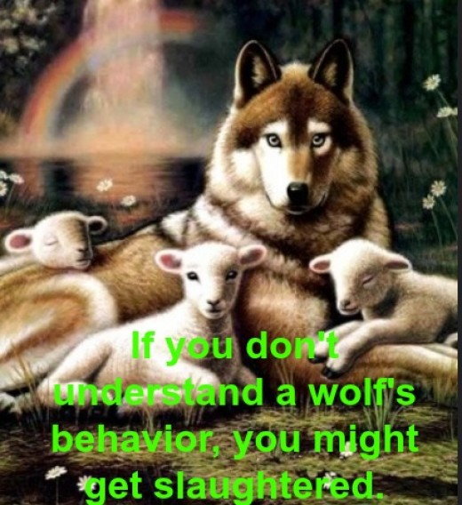 A wolf is a predator -- on the move and ready to take you down. Don't take it personally. It's just her nature.