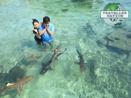Shark Breeding Menjangan Island