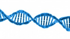 10 Genetic Modifications Claimed to Enhance Performance