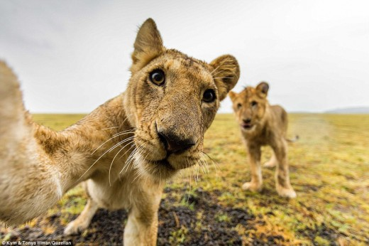 Long Live Wildlife :)