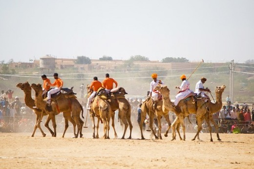 Camel are the major draw of any festival in Rajasthan especially if it is a cattle fair like Jaisalmer Festival