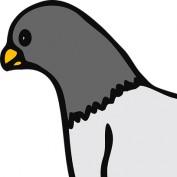 ncrj profile image