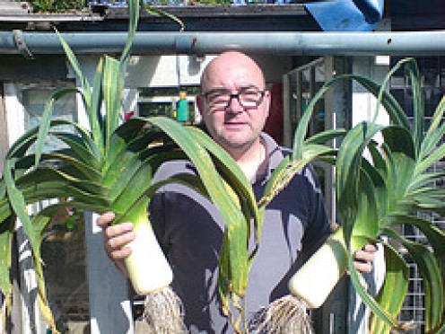 Them are some Leeks! You aren't likely to see leeks this size at the supermarket, this is an art form!