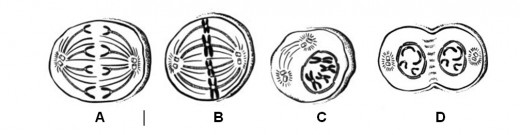 This is what a visual question on the HSA can look like.  This is the process of Mitosis.  The real order is Prophase - Metaphase - Anaphase - Telophase