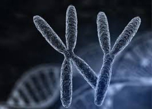 Artist conception of the X and Y Chromosomes