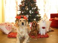 Free Handmade Ornament Patterns for the Pet in Your Family