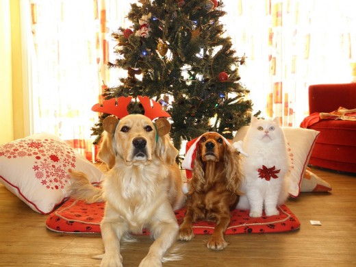 Dogs and cats love Christmas too.