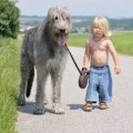 Top 10 Tallest Dogs