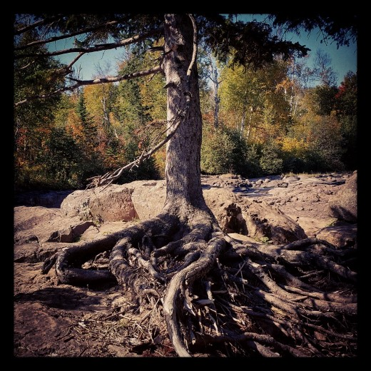 This tree appears to kneel which can be an image of a life of prayer.
