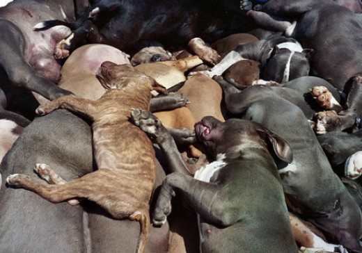 From the Denver pit bull dog ban!!!