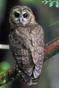 Owls Big and Small