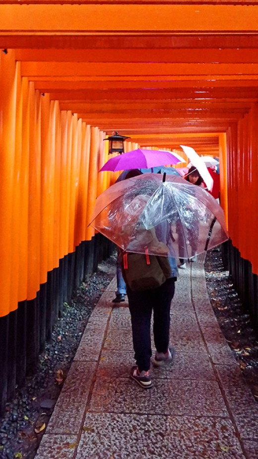 The dense torii path offers little shelter.