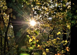 Adding Sun Flares to Your Photographs