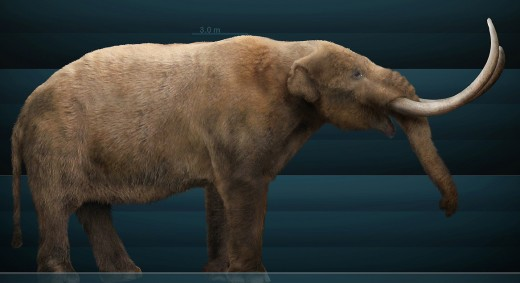 Mastodons were typically shorter than mammoths, elephants, and deinotheres, however they made up for it in length and robustness.