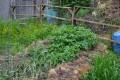 Summer is a Busy Time on an Urban Farm