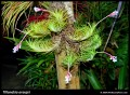 Bromeliads: Tillandsia Air Plants