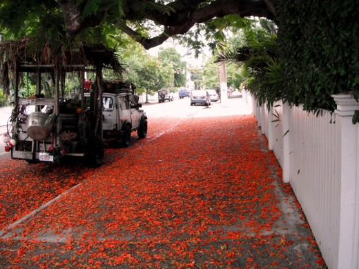 "In Key West, it ""snows"" flower petals, never ice or frost"