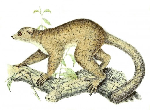 The Weasel-Sportive Lemur By Peter Willem Marinus Tarp Public Domain