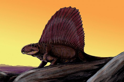 Dimetrodon Dinosaur Reconstruction By Doritry Bogadenort CC BY-SA 3.0