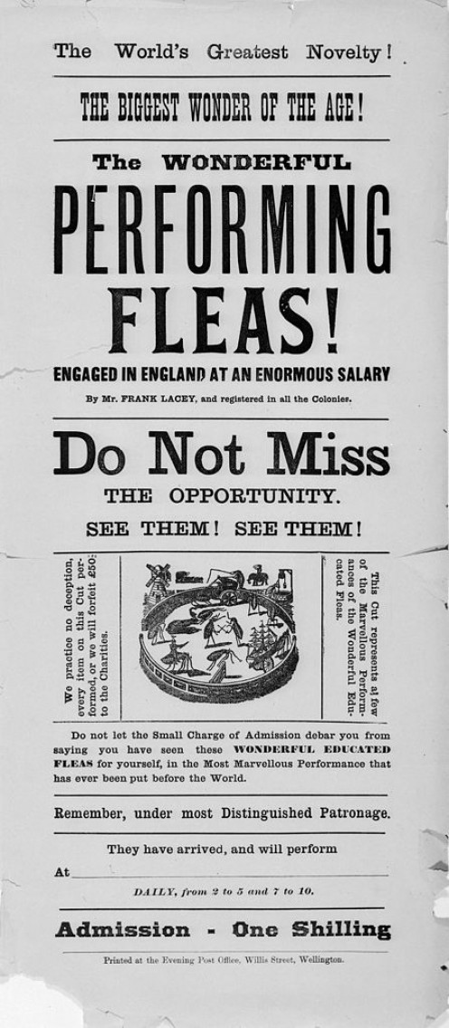 Evening Post (Wellington, N.Z.). Advert for performing flea circus 1889.