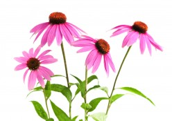 Best Herbs for your Immune System