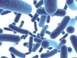 Probiotics Supplements - Do You Need One to Maintain a Better Digestive Health?