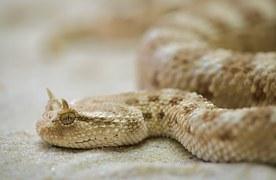 Terrarium,  a toxic reptile