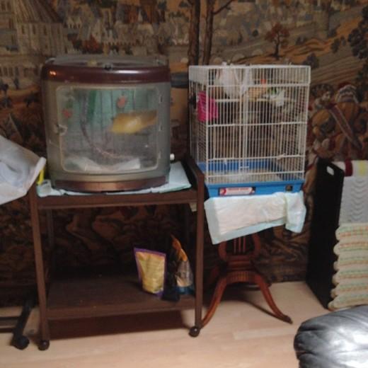 Birdcage corner