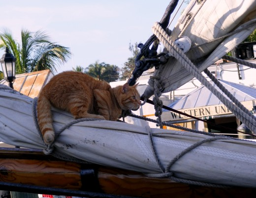 A ship's cat relaxes on the bowsprit of a schooner at the seaport