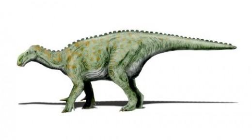 The Iguanodon Dinosaur By Nobu Tarura CC BY-SA 3.0