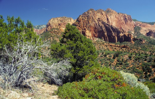 View in the Kolob Canyons. Kolob Canyons is the northwest section of Zion National Park, Utah, United States. The Kolob Canyons are part of the Colorado Plateau region of the Zion National Park and are noted for their colorful beauty and diverse lan