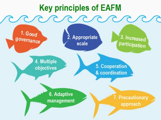 Here are the main principles of the EAFM.
