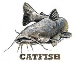 Catfishing America
