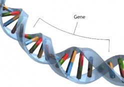 Genetic Mutations: MTHF and How to Interpret Genetic Test Results