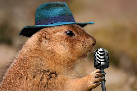Singing Prairie Dog | Funny Animal Photos