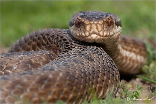 """The Old Serpent from Genesis is the cause of all """"Our"""" Issues. Just Let Go and Let Elohim!"""