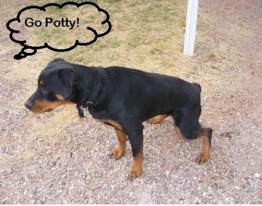 Train dog to go potty in the rain